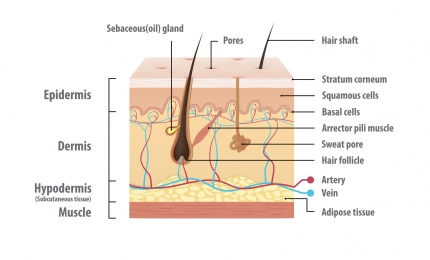 The Science Behind Skin and Skin Reactions